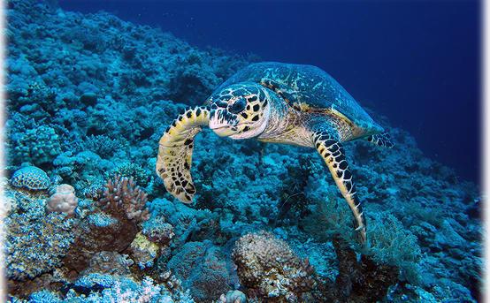Как фотографировать под водой?