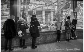 С занятия по фотографии в Москвском зоопарке