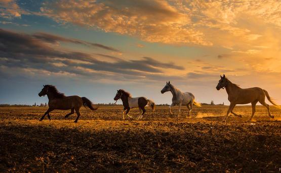 Фототур «Дикая природа Азовского и Черного морей»