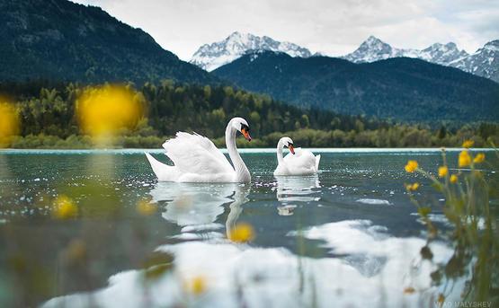 Фототур «По альпийской дороге Баварии»